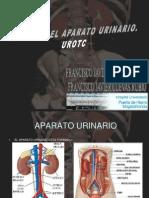 Pruebas Diagnosticas Aparato Urinario