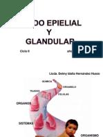 1 Tej. Epitelial y Glandular 2012