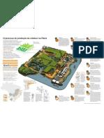 Infografico Fibria 6 Agosto 2012