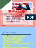 KELOMPOK 1- KROMOSOM