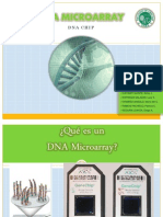 DNA Microarray (Grupal)