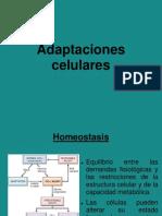 Adapt Ac i Ones Celular Es