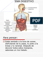 Sistema Digestivo Power Point