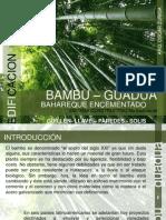 BAMBÚ - GUADUA