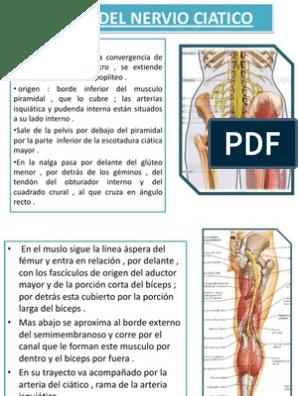 nervio ciatico recorrido pdf