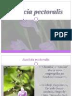 Justicia pectoralis