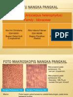 Presentasi Ciri Makro-Mikro Kayu Nangka Pangkal