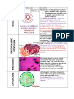 Fuctions of a Eukaryotic Cell (Reprint With Colour Cartridge is Fixed)