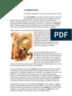 La nutrición y su importancia