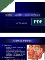 12 Parotida Cartida Venasdelcuello 111009235459 Phpapp01 (1)