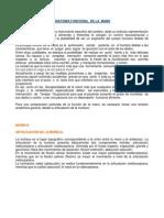 Anatomia Funcional de La Mano[1]