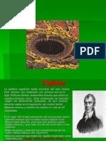 tejidos (1)