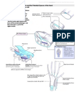Fascia, Septa, Tendon Sheaths and the Potential Spaces of the Hand