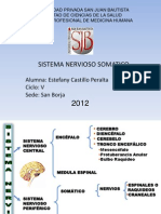 Sistema Nervioso Somatico