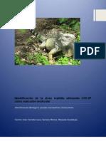 Identificacion de la clase reptilia con marcadores moleculares
