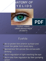 Anatomy of Eyelids