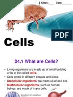 C24 Cells 2012