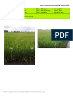2012WS MET 2-Irrigated - Week 10 (August) Isabela