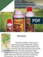 Pengaruh Hormon Terhadap Pertumbuhan Dan Perkembangan Kacang Hijau