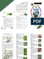 trifoliado