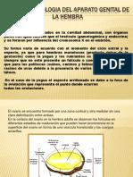 Anatomofisiologia Del Aparato Genital de La Hembra