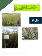 2012WS MET 2-Irrigated - Week 13 (September) Isabela