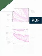 Tugas Patologi Anatomi (Gambar & Essay)