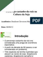 APRESENTAÇÃO-PERCEVEJO CASTANHO
