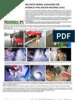 Casos de Maltrato Animal Auxiliados Por Paz Animal Gt y PNC.