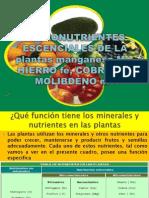 Micronutriente
