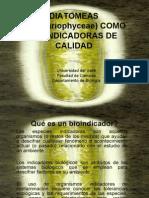 seminario-Diatomeas