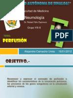 Camacho Ureta Alejandra Perfusion