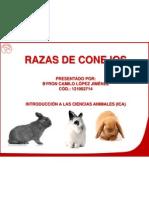 Conejos 121002714 Byron Lopez
