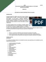 ANATOMÍA DEL APARATO REPRODUCTOR DE LA GALLINA