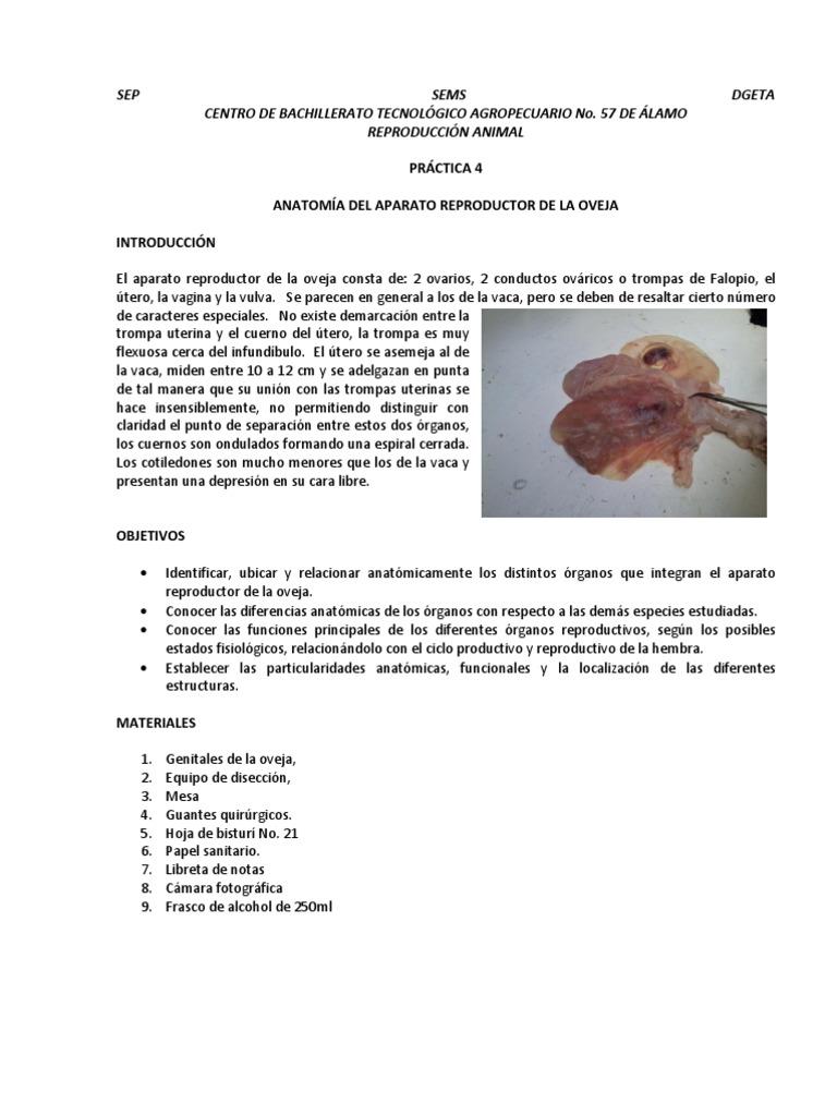 Excelente Ovejas Anatomía Reproductora Colección - Anatomía de Las ...