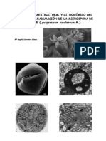 MicrosporaTomate
