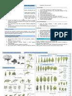 Practica Identificacion Plantas