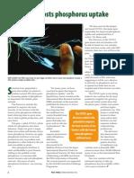 Rice Today Vol. 11, No. 4 Rice gene boosts phosphorus uptake