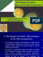 3. Morfologia Colonial y Microscopica de Los Mo