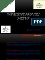 Microbiologia Huevo