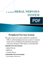 Peripheral Nervous Systemppt