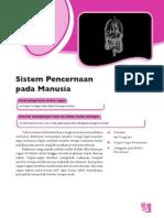 3. Sistem Percernaan Pada Manusia