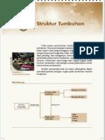 6. Struktur Tumbuhan