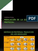 Modulación de la Sintesis Proteica Expo