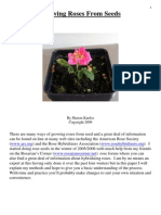 Narative Growing Roses From Seeds