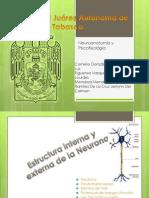 NEUROTRANSMISORES-NEUROANATOMÍA