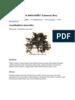 Macam-macam Spesies Filum Rhodophyta