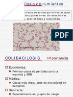 ColiBacilosis en Rumiantes