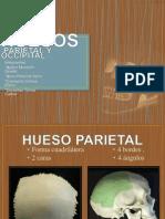 Hueso Parietal y Occipital