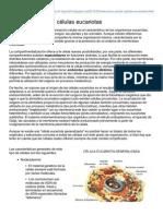 b Log Ia20.Blogspot.mx Estructura Celular Clulas Eucariotas